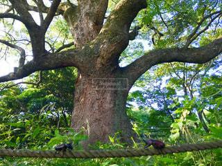 夏,山,大木,樹木,お散歩,カブトムシ