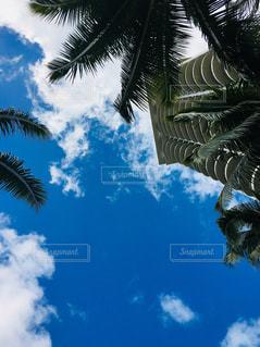 空,屋外,ビーチ,樹木,旅行,パーム,日中