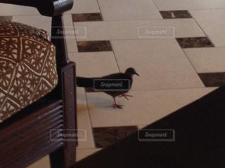 風景,動物,鳥,旅行,鳩,日中
