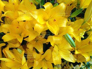 花,黄色,景色,草木