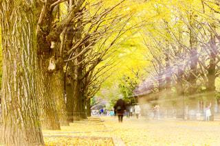 自然,秋,紅葉,東京,綺麗,葉っぱ,散歩,黄色,景色,落ち葉,樹木,イエロー,色,黄,yellow,光が丘公園