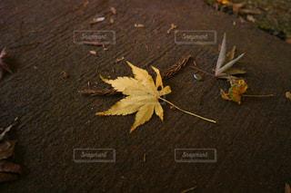 自然,秋,紅葉,東京,綺麗,葉っぱ,散歩,黄色,景色,落ち葉,樹木,イエロー,色,黄,草木,yellow,光が丘公園