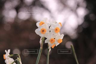 花,花畑,東京,かわいい,きれい,綺麗,散歩,景色,可愛い,水仙,歩道,野外,散歩道,黄,風情,インスタ映え