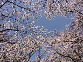 自然,春,秋,屋外,樹木,草木