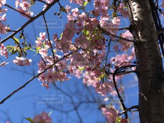 風景,空,花,春,屋外,枝,樹木,草木,ブロッサム