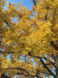 秋,黄色,東京駅,色,いちょう