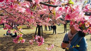 花,春,桜,屋外,ピンク,満開,お花見,人物,さくら,キレイ,ブロッサム