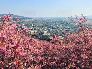 自然,空,花,春,桜,屋外,青空,花見,景色,街,お花見,高台
