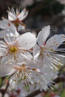 花,梅,春の花