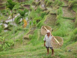 棚田,田んぼ,田園,米,バリ島,インドネシア