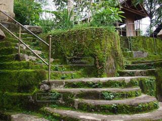 自然,風景,緑,苔,バリ島,インドネシア