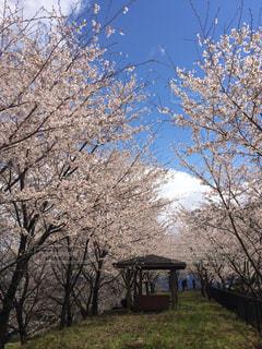 風景,空,花,春,桜,穴場