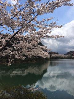 風景,花,春,桜,水面,穴場