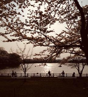 桜,夕暮れ,池,花見,セピア