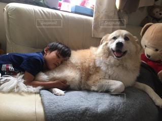 犬,かわいい,寝転ぶ,ソファ,幼児