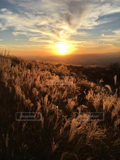 フィールドの背景の夕日と羊の群れの写真・画像素材[1860765]