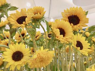 花,ひまわり,黄色,幸せ,休暇