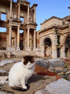 猫,観光,トルコ,海外旅行
