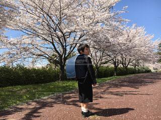 入学おめでとうの写真・画像素材[1839415]