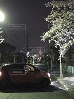 夜,綺麗,夜桜,お花,お花見,ドライブ,愛車