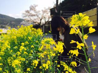 女性,春,カメラ女子,黄色,菜の花,お花見,お散歩
