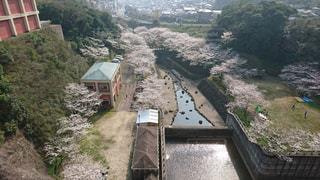 自然,風景,桜,お花見,ダム