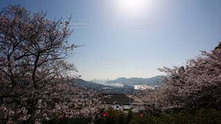 自然,風景,海,桜,橋,お花見,お散歩,高台