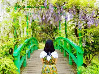 女性,橋,緑,白,後ろ姿,紫,洋服,人物,後姿,藤の花,ガーデン,白藤,インスタ映え