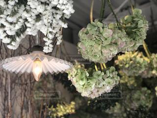 花のクローズアップの写真・画像素材[2142914]