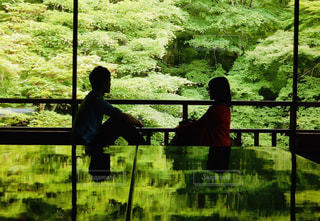 新緑の紅葉の写真・画像素材[2262521]