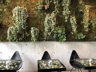 緑豊かなカフェの写真・画像素材[2722995]