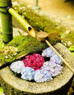 紫陽花と柄杓の写真・画像素材[2794017]