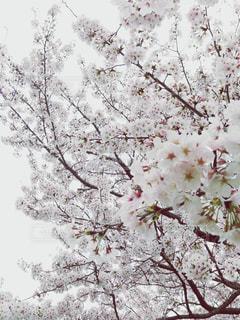 花曇りの写真・画像素材[1850189]