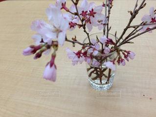 花,桜,室内,コップ,お花見,さくら