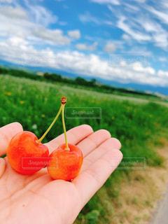 自然,空,緑,雲,北海道,山,果物,さくらんぼ,フィルム,フィルム写真,フィルムフォト