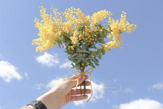 春,青空,黄色,ミモザ