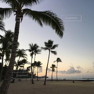 海,ビーチ,砂浜,水面,海岸,樹木,草木,パーム