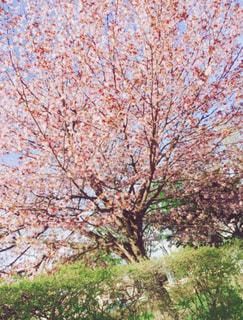 近くの木のアップの写真・画像素材[1884704]