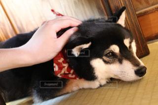 犬を可愛がる人の写真・画像素材[2095902]