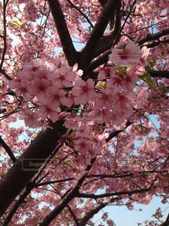 春,桜,ピンク,はーと