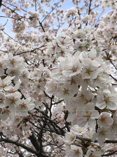 花,春,ブロッサム
