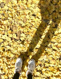 綺麗,黄色,鮮やか,爽やか,色,素敵,黄,きいろ,yellow,キレイ