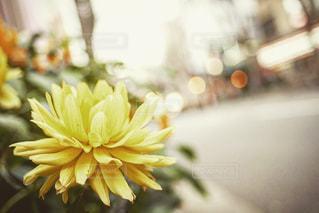 花,街角,黄色,路上