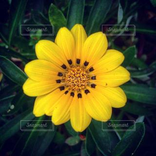黄色の花の束の写真・画像素材[1842667]