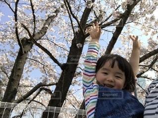 桜,バンザイ,女の子,3歳,大きくなあれ,ばんざーい