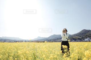 自然,空,花,春,カメラ,カメラ女子,青空,黄色,菜の花,光