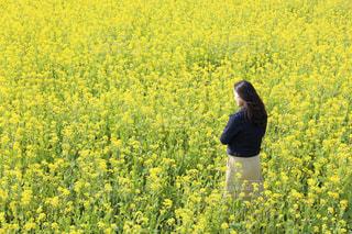 風景,花,黄色,菜の花,景色,女子,光,人,仲間