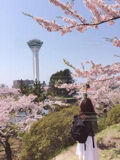 女性,花,春,桜,ピンク,景色,サクラ,お花見,さくら,フォトジェニック,インスタ映え