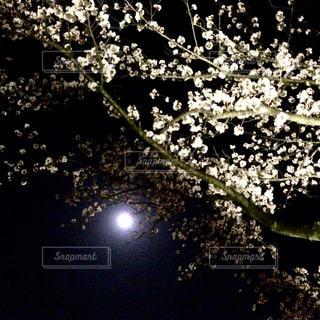 夜景,花見,夜桜,月,満月,さくら