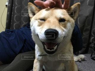 犬の写真・画像素材[63679]